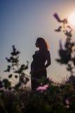 Silhueta de uma mulher gravida no por do sol Imagem de Stock Royalty Free