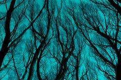 Silhueta desencapada dos ramos contra o céu azul ciano Foto de Stock