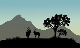 Silhueta do antílope nos montes Fotografia de Stock