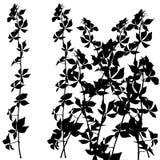 Silhueta do arbusto Imagem de Stock