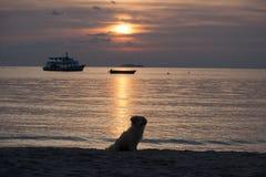 A silhueta do cão senta-se na praia com fundo do nascer do sol imagens de stock