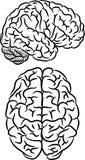 Silhueta do cérebro Imagem de Stock Royalty Free