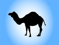 Silhueta do camelo Imagens de Stock Royalty Free