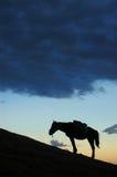 Silhueta do cavalo Fotos de Stock