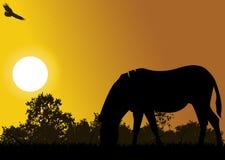 Silhueta do cavalo com fundo da mosca da águia Imagem de Stock Royalty Free