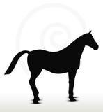 Silhueta do cavalo em estar ainda a posição Imagem de Stock