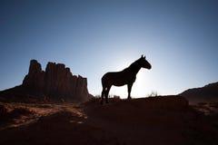 Silhueta do cavalo na frente do mesa do deserto Fotos de Stock