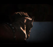 Silhueta do cavalo no fundo escuro Fotografia de Stock Royalty Free