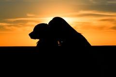 Silhueta do cão da mulher Imagens de Stock Royalty Free