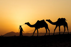 Silhueta do comerciante do camelo que cruza a duna de areia Imagens de Stock