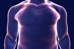 Silhueta do corpo humano, ilustração Imagens de Stock