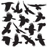 A silhueta do corvo ajustou 01 Imagens de Stock