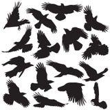 A silhueta do corvo ajustou 02 Fotografia de Stock Royalty Free