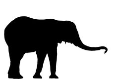 Silhueta do elefante Fotos de Stock Royalty Free