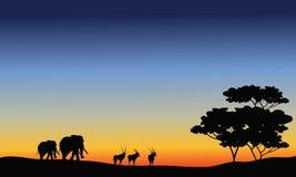 Silhueta do elefante e do antílope Foto de Stock