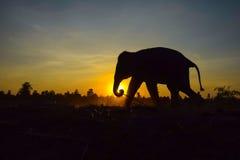 Silhueta do elefante no por do sol, Imagens de Stock Royalty Free
