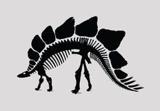 Silhueta do esqueleto do dinossauro Imagem de Stock
