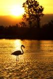 Silhueta do flamingo Imagens de Stock