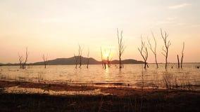 Silhueta do lapso de tempo da árvore seca na água no reservatório no por do sol, distrito de Phra do golpe de Sriracha, Chonburi, filme