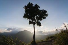 Silhueta do luminoso de uma árvore Fotografia de Stock