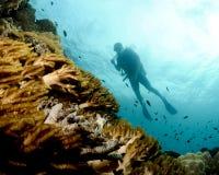 Silhueta do mergulhador Imagens de Stock