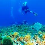 Silhueta do mergulhador do mergulhador perto da parte inferior de mar Imagem de Stock