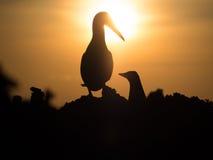 Silhueta do nascer do sol Imagem de Stock