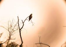 Silhueta do pássaro imagens de stock
