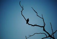 Silhueta do pássaro Imagens de Stock Royalty Free