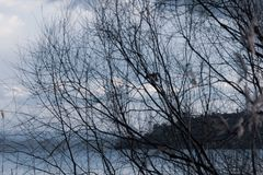 Silhueta do pássaro de voo no meio das plantas e das árvores imagens de stock royalty free