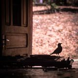 Silhueta do pássaro em um fogão Fotos de Stock