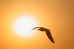 Silhueta do pássaro oposto ao sol fotografia de stock royalty free