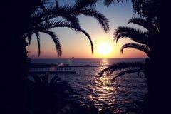 Silhueta do palmtree com nascer do sol, mar e cais no fundo Imagem de Stock