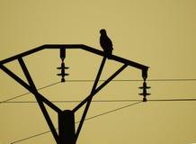 Silhueta do papagaio preto imagens de stock