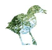 A silhueta do pato selvagem do pato selvagem encheu-se com a superfície rippled da água Fotografia de Stock Royalty Free