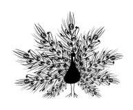 Silhueta do pavão com cauda decorativa Fotografia de Stock Royalty Free