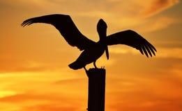Silhueta do pelicano Fotografia de Stock
