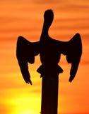 Silhueta do pelicano Imagem de Stock Royalty Free