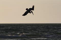 Silhueta do pelicano do mergulho Imagens de Stock Royalty Free