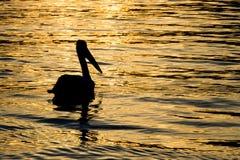 Silhueta do pelicano do por do sol Imagens de Stock