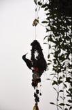 Silhueta do perfil lateral de um sunbird nele ninho do ` s imagens de stock royalty free