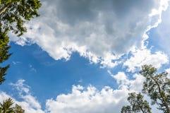 Silhueta do pinheiro contra o céu nebuloso do por do sol Foto de Stock Royalty Free
