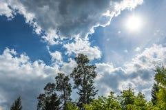 Silhueta do pinheiro contra o céu nebuloso do por do sol Imagens de Stock
