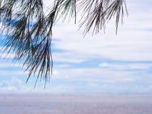 Silhueta do pinheiro no fundo do céu azul Fotos de Stock