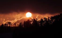 Silhueta do pinheiro no por do sol da montanha Foto de Stock Royalty Free