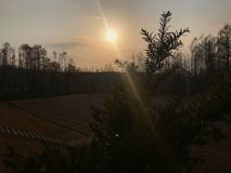 Silhueta do pinheiro sob o sol Foto de Stock Royalty Free