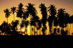 Silhueta do por do sol Imagem de Stock