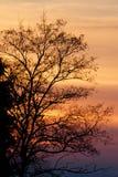 Silhueta do por do sol de uma árvore Imagens de Stock Royalty Free