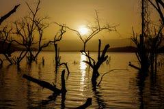 Silhueta do por do sol das árvores na água de um lago Imagem de Stock