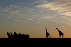 Silhueta do safari fotos de stock royalty free